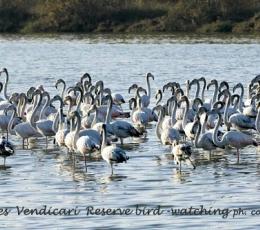 vendicari-bird-watching_0
