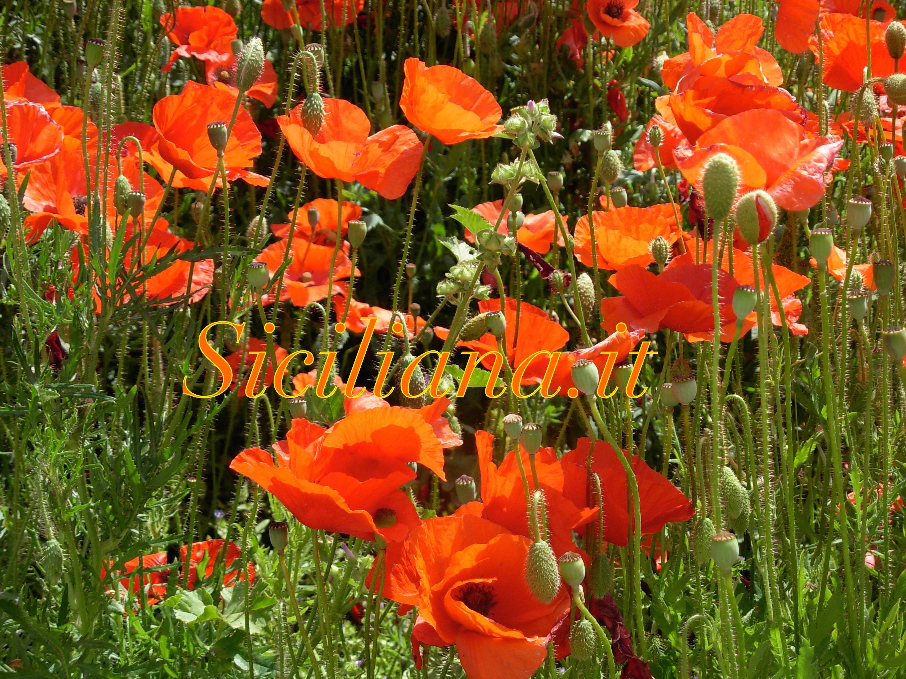 CiaoPiics.com Natura Sicily Springtime_11 copy